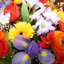 Frische Blumensträuße